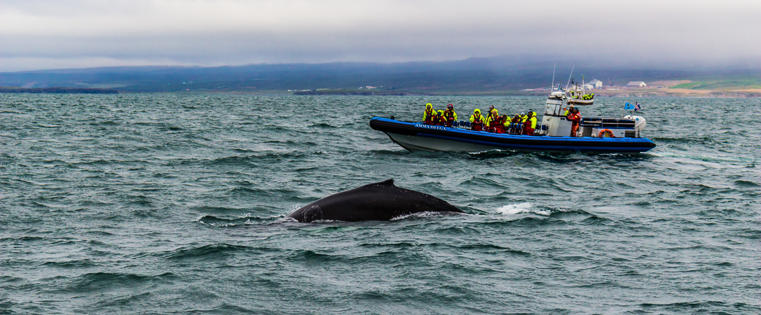 North-Sailing-whale-watching