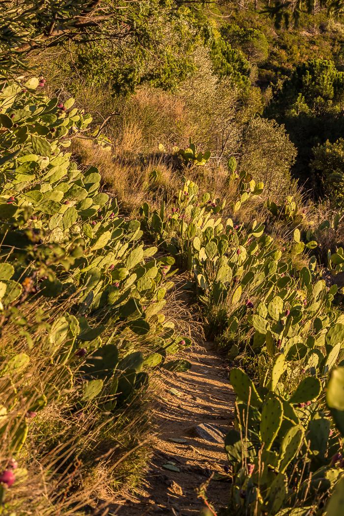 Cactus ensoleillés à Rodès