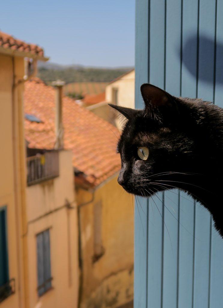 Le chat de Kikimagtravel