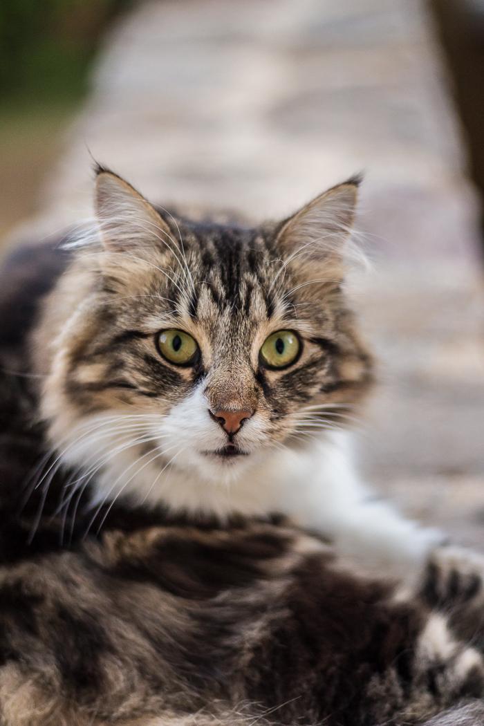 Chat du gîte en Lozère