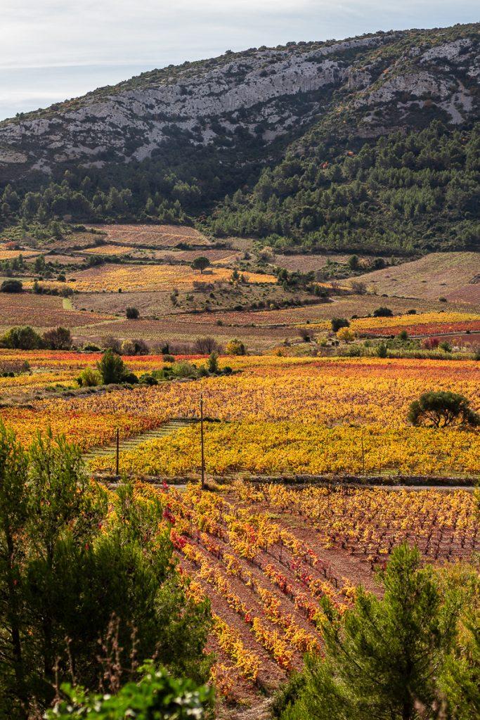 Vignes d'automne entre Vingrau & Tautavel