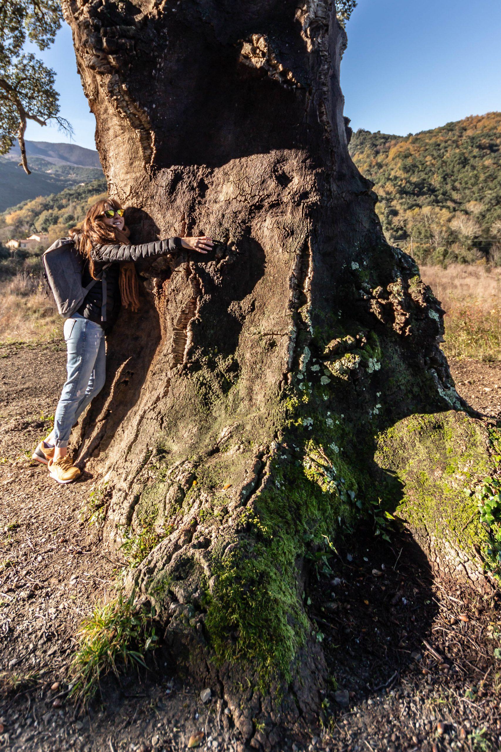 L'arbre remarquable de Reynes