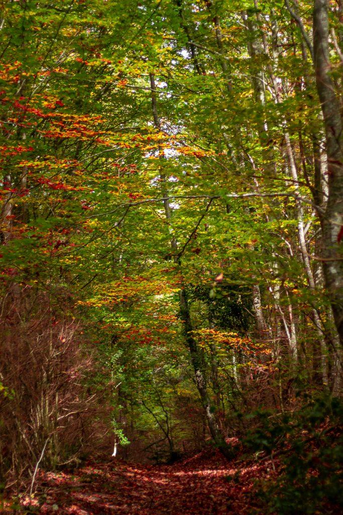 forêt du Vivier en automne