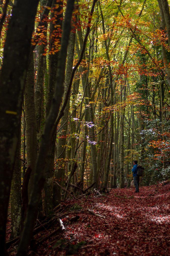 Forêt du Vivier