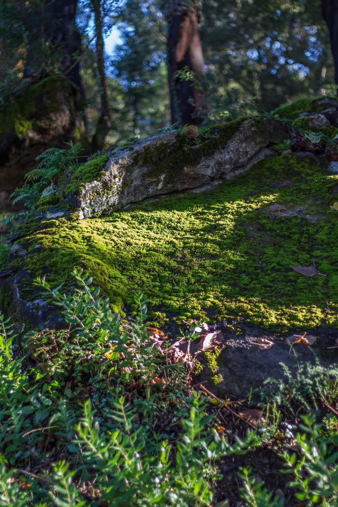 Mousse dans la forêt à Reynes