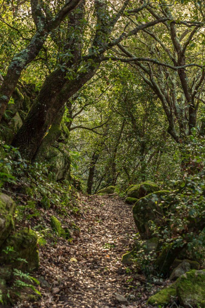 chemin forestier sur le sentier des Dolmens en Fenouillèdes