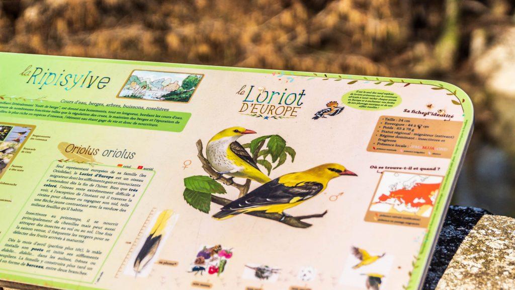 Panneau didactique sentier des oiseaux Ansignan