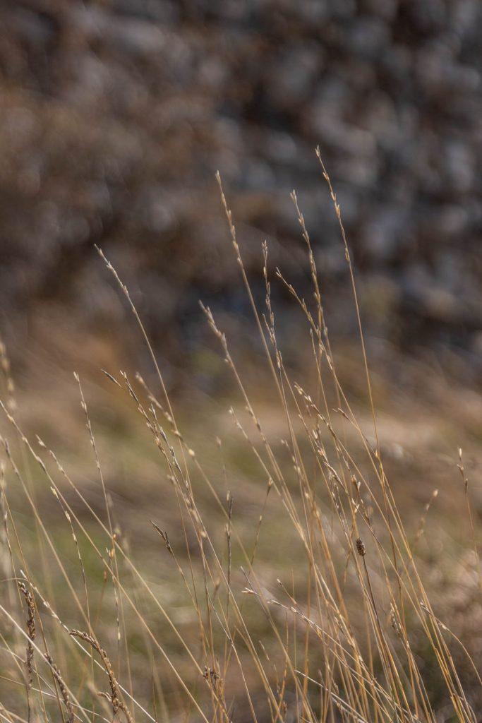 Détails de la nature dans les Pyrénées Orientales