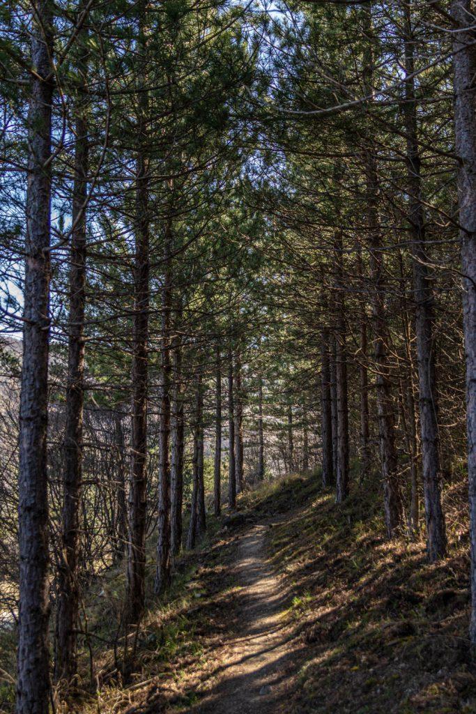 Sentier vers le Hameau d'En depuis Nyer