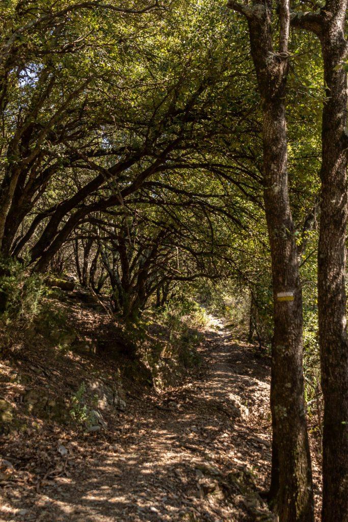 sentier en sous bois près du prieuré de Serrabone